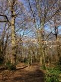 Queen's Wood II