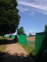 Hampstead Heath II