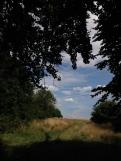 Hamsptead Heath V