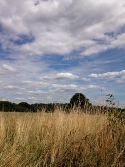 Hamsptead Heath VI
