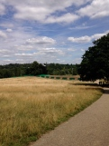 Hamsptead Heath VII